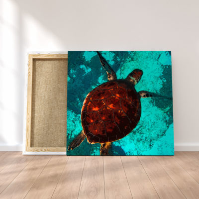 toile-tortue